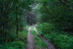 Δάσος με τα δέντρα και βρύο στο υπόβαθρο Λιθουανία στοκ φωτογραφίες