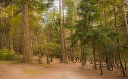 Δάσος με τα μεγάλα δέντρα Στοκ φωτογραφία με δικαίωμα ελεύθερης χρήσης