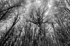 Δάσος με τα πολύ εκφραστικά δέντρα Στοκ Φωτογραφίες