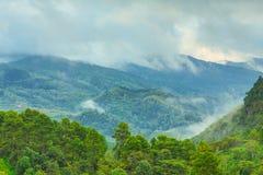 Δάσος με την ομίχλη Στοκ Εικόνα
