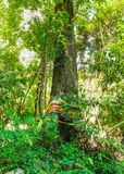 Δάσος με την πίστη Στοκ φωτογραφία με δικαίωμα ελεύθερης χρήσης