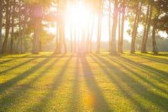 Δάσος με τον ήλιο στοκ φωτογραφία με δικαίωμα ελεύθερης χρήσης