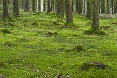 Δάσος με το βρύο Στοκ Εικόνες