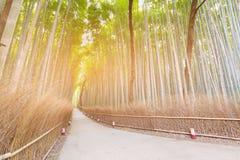 Δάσος μπαμπού με τον τρόπο περπατήματος σε Arashiyama Κιότο Ιαπωνία Στοκ εικόνα με δικαίωμα ελεύθερης χρήσης