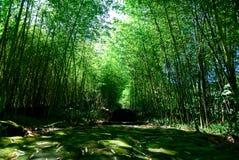 δάσος μπαμπού πράσινο Στοκ Φωτογραφία