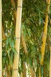 Δάσος μπαμπού σε Anduze Στοκ εικόνες με δικαίωμα ελεύθερης χρήσης