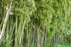 Δάσος μπαμπού σε Anduze Στοκ φωτογραφίες με δικαίωμα ελεύθερης χρήσης