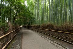 Δάσος μπαμπού σε Arashiyama του Κιότο Στοκ Εικόνες