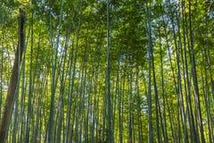 Δάσος μπαμπού σε Arashiyama Στοκ φωτογραφία με δικαίωμα ελεύθερης χρήσης