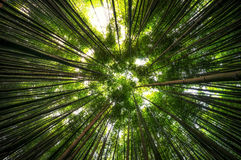 Δάσος μπαμπού σε Damyang Στοκ φωτογραφία με δικαίωμα ελεύθερης χρήσης