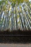 Δάσος μπαμπού σε Sagano Arashiyama Κιότο Ιαπωνία Στοκ Εικόνα