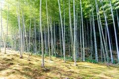 Δάσος μπαμπού στην Ιαπωνία, Arashiyama Στοκ Εικόνες
