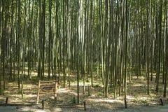 Δάσος μπαμπού στο Κιότο, Ιαπωνία Στοκ Φωτογραφία