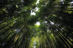 Δάσος μπαμπού στο Κιότο Ιαπωνία Στοκ φωτογραφίες με δικαίωμα ελεύθερης χρήσης