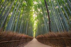 Δάσος μπαμπού στο Κιότο, Arashiyama, Ιαπωνία Στοκ φωτογραφία με δικαίωμα ελεύθερης χρήσης