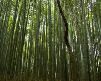 δάσος μπαμπού Στοκ εικόνα με δικαίωμα ελεύθερης χρήσης