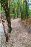 δάσος μπαμπού Στοκ εικόνες με δικαίωμα ελεύθερης χρήσης