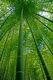 δάσος μπαμπού Στοκ Φωτογραφίες