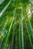 Δάσος μπαμπού Arashiyama, Κιότο, Ιαπωνία Στοκ Φωτογραφίες