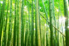 Δάσος μπαμπού Arashiyama κοντά στο Κιότο Στοκ φωτογραφία με δικαίωμα ελεύθερης χρήσης