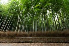 Δάσος μπαμπού Arashiyama στο Κιότο Ιαπωνία Στοκ Εικόνα