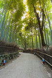 Δάσος μπαμπού Arashiyama στο Κιότο Ιαπωνία Στοκ φωτογραφίες με δικαίωμα ελεύθερης χρήσης
