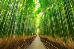 Δάσος μπαμπού Arashiyama στο Κιότο Στοκ φωτογραφίες με δικαίωμα ελεύθερης χρήσης