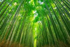 Δάσος μπαμπού Arashiyama στο Κιότο Στοκ εικόνα με δικαίωμα ελεύθερης χρήσης