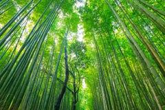 Δάσος μπαμπού Arashiyama στο Κιότο Στοκ Φωτογραφία
