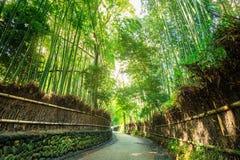 Δάσος μπαμπού Arashiyama Στοκ Φωτογραφία