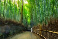 Δάσος μπαμπού Arashiyama Στοκ εικόνα με δικαίωμα ελεύθερης χρήσης