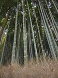 Δάσος μπαμπού arashiyama-Sagano, Κιότο, Ιαπωνία Στοκ εικόνες με δικαίωμα ελεύθερης χρήσης