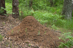 δάσος μυρμηγκιών Στοκ Φωτογραφίες