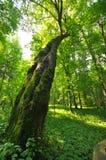 δάσος μυστήριο Στοκ εικόνα με δικαίωμα ελεύθερης χρήσης