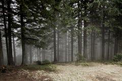 Δάσος μυστηρίου Στοκ φωτογραφίες με δικαίωμα ελεύθερης χρήσης