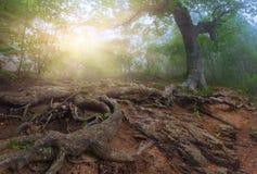 δάσος μυστικό Στοκ εικόνα με δικαίωμα ελεύθερης χρήσης