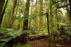 Δάσος, Νέα Ζηλανδία Στοκ Φωτογραφία