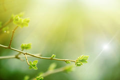 δάσος νεράιδων Στοκ Εικόνα