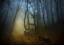 Δάσος νεράιδων Στοκ εικόνες με δικαίωμα ελεύθερης χρήσης