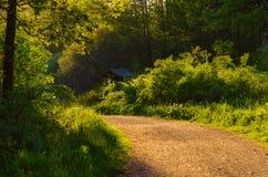 Δάσος νεράιδων Enchanted Στοκ Φωτογραφία