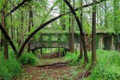 Δάσος νερού Wuzhong Στοκ φωτογραφία με δικαίωμα ελεύθερης χρήσης
