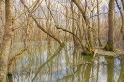 Δάσος νερών πηγής στοκ εικόνες