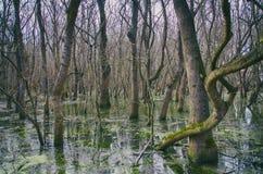 Δάσος νερών πηγής στοκ εικόνα