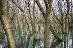 Δάσος νερών πηγής στοκ φωτογραφίες
