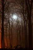 Δάσος νύχτας αναμμένο με το σεληνόφωτο Στοκ Φωτογραφίες