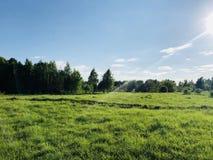 Δάσος, ξέφωτο, ήλιος, καλοκαίρι, μπλε ουρανός, πράσινη χλόη στοκ φωτογραφία