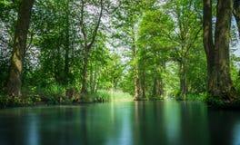 Δάσος ξεφαντωμάτων γραμμών ροής κοντά στο Βερολίνο Στοκ Εικόνα