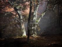 Δάσος ομίχλης φθινοπώρου στοκ φωτογραφίες