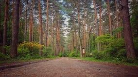 Δάσος ομορφιάς Στοκ εικόνα με δικαίωμα ελεύθερης χρήσης