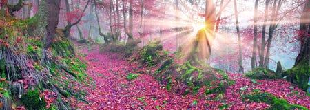 Δάσος οξιών το φθινόπωρο Στοκ Εικόνες